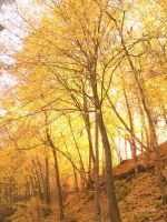 Golden October. by MauiMelle