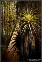 Bromeliad Shadows by juddpatterson