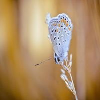 Little Creatures 105 by Frank-Beer