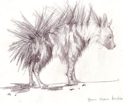 Brown Hyena by elksbugle