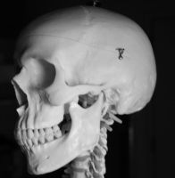 Skull Photo Stock 3 by CcTheMonkey