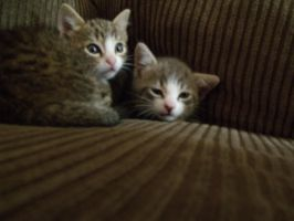 Belle and Abby (my first kittens) by squarah1018
