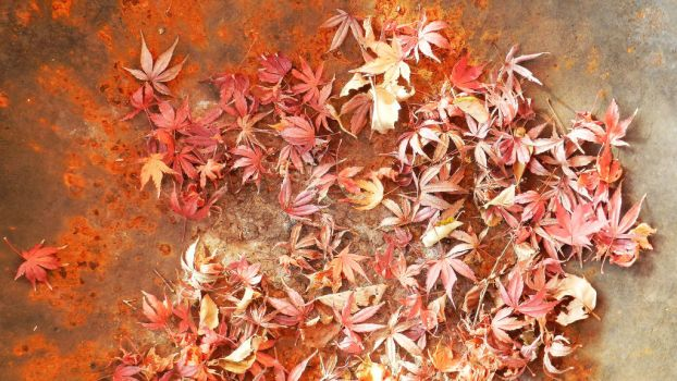 Leaves and Rust by Scarlettletters