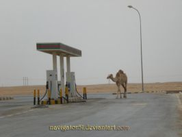 Camel getting some fuel by Navigator51