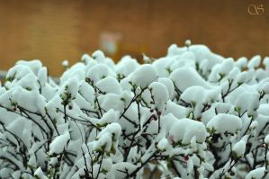 May day snow by saldon