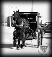 Amish Horse Carriage by WolverineAC