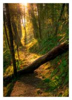 Little Darby 2 by austinboothphoto