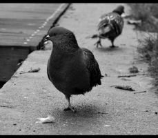 the loneliest pigeon by quicksilverq