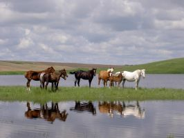 all the horsesin a row by keepitoriginalphoto
