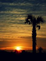 Beach Palm by Dark-and-Dreamless