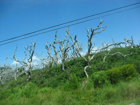 Wicked Trees by Madisonne