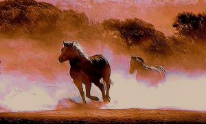 Wild Horses by montag451