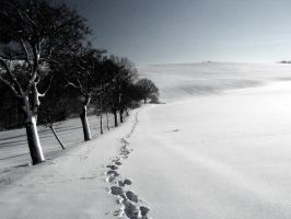 steps in the snow by Hasche