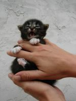 Baby Cat 02 by FantasyStock