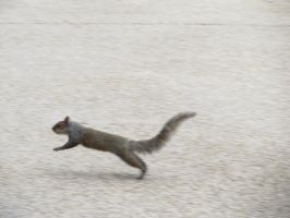 Squirrel in motion by KateKannibal