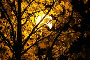 sol nocturno by Andreamacka
