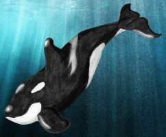 Orca Copic w/ stock background by dazkaj9