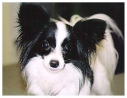 Papillion by SarLilly