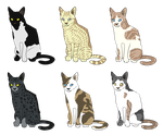 cat adopts 6/6 open by LUMlN