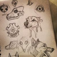 Canine Study by Henva