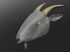 3D Goat Head by todd102030