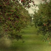 Apple Orchard by myrnajacobs