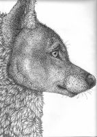 Pointillism wolf by wolffoxin