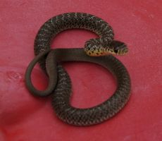 snake 8 by pricecw-stock