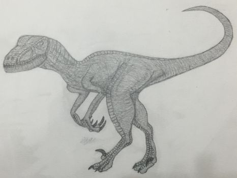 Velociraptor ! by ALL-HAIL-MEGZY3