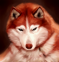 Husky Painting by kathrynlayno