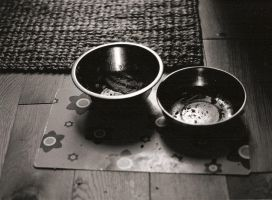Empty Cat Bowls by CorinthiaJoy