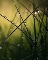 Morning Dew by Council66