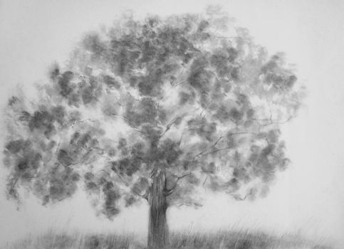 Tree practice inspired by sister's tree practice 2 by Shruti1234