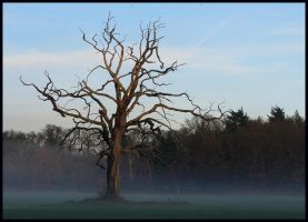 Revisiting the oak in December by jchanders
