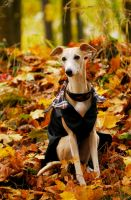 Autumn . by laura75325