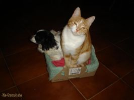 cat and dog in only doghouse 2 by Rheis