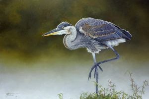 Great Blue by thomsontm