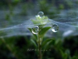 setting a trap for droplets by sinanTR