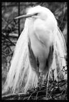 Egret in BW by I-Heart-Photos