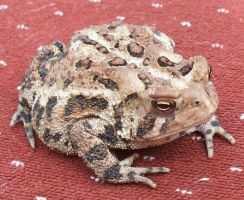 Toad 2 by Penny-Stock