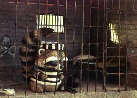 Raccoon jail cell by AshleyCharlene