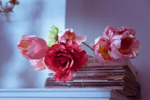 Lovely roses by EliseEnchanted