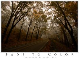 Fade to Color by biological