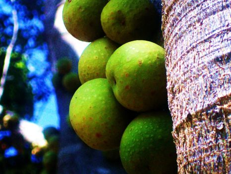 Green figs by Tazzie98