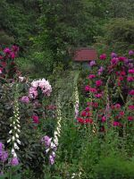Rododendrons by MDGallery