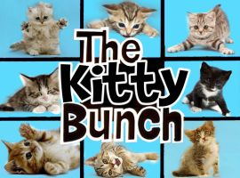 The Kitty Bunch by Brandtk