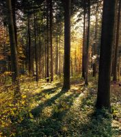 wald - impression - 3 by VooDooMania
