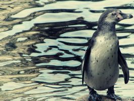 Pinguin '1 by Bluickage