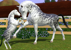 Sims 3 Horse Marking Download: Full Sabino1 by Isolated-Design