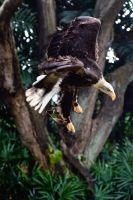 Birds of Prey 1 by Shooter1970